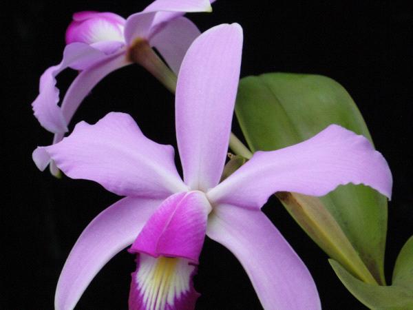 Atelier orchidées