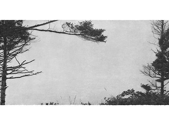 arbrejunglinlee
