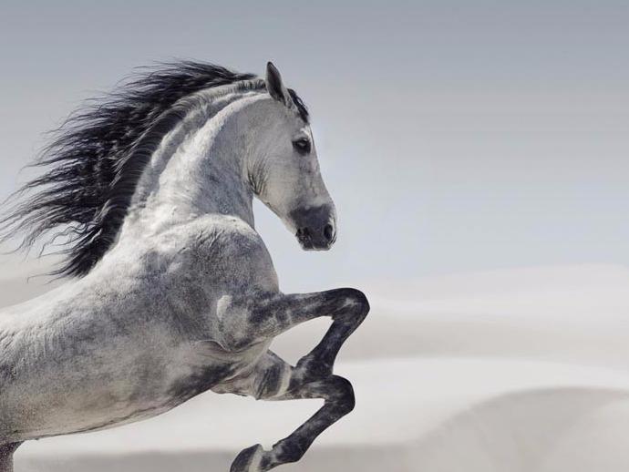 c'est beau un cheval.jpg