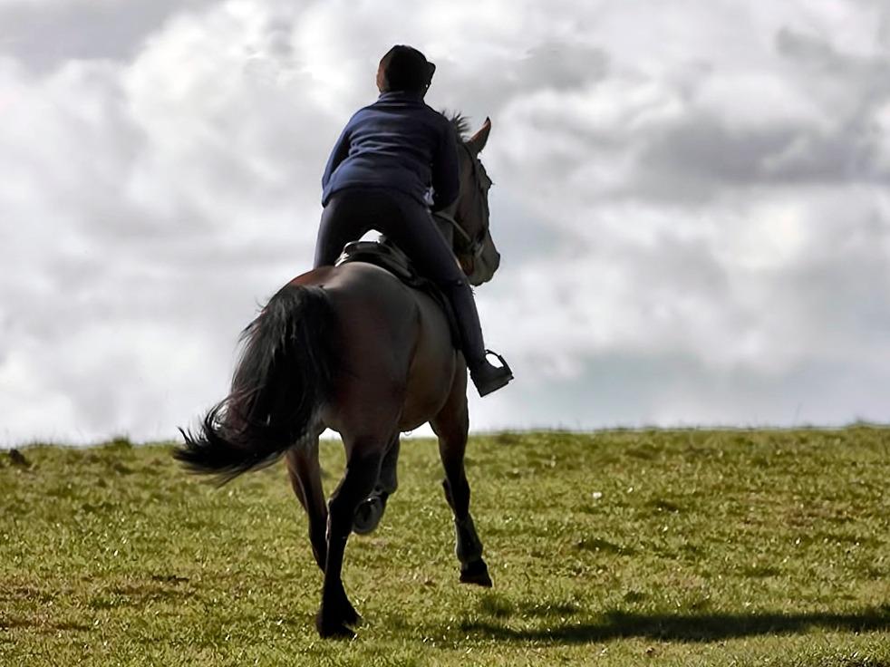 entrainement-cheval-de-sport-livre-librairie-mollat.002.jpg
