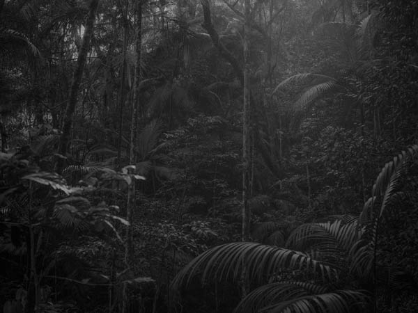 jungle2©VictorCornec.jpg
