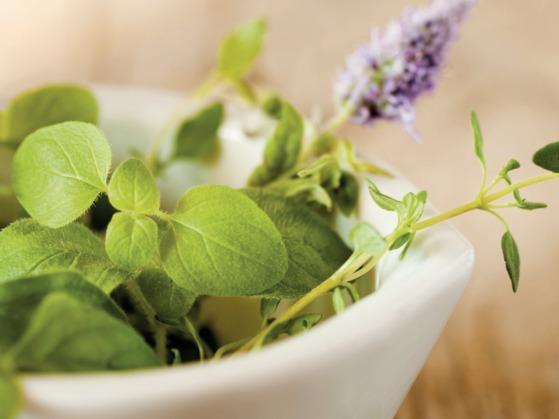 l'homme et les plantes médicinales.png
