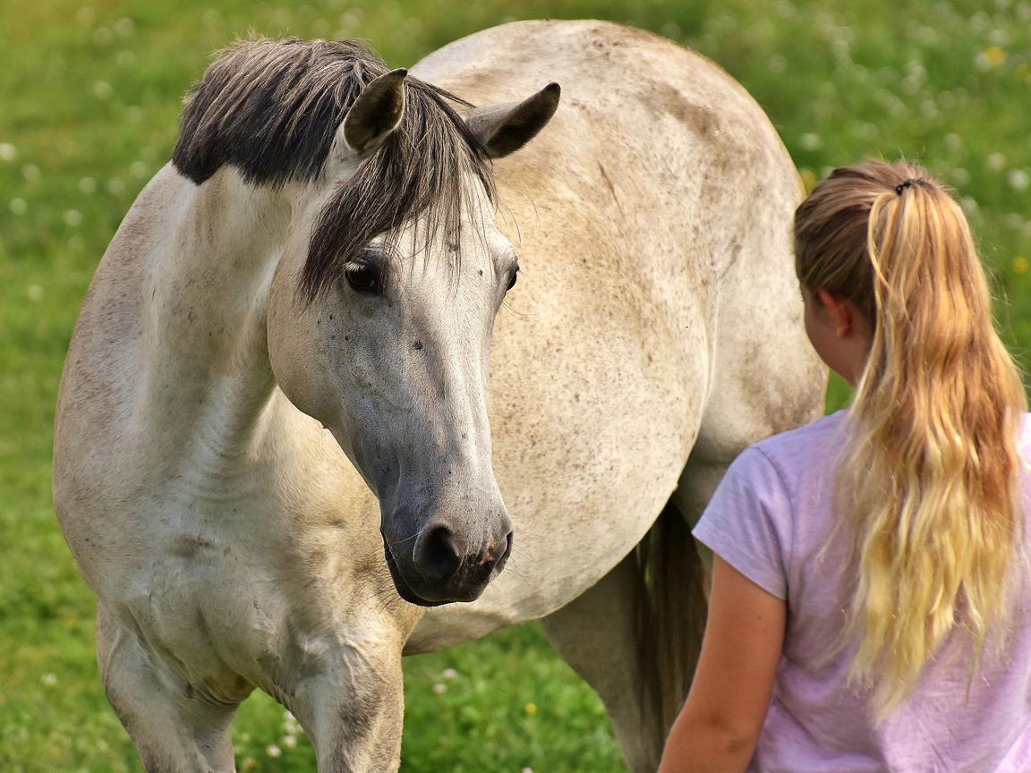 relation-cheval-ethologie-equitation-livres-librairie-mollat.002.jpg