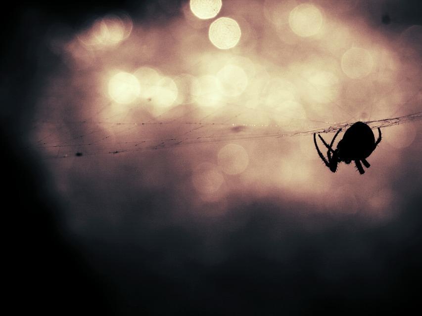 Toile d'araignée.jpg