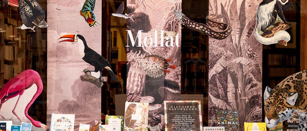 vitrine-mollat-musee-histoire-naturelle-2019-bordeaux---cadrage3.jpg