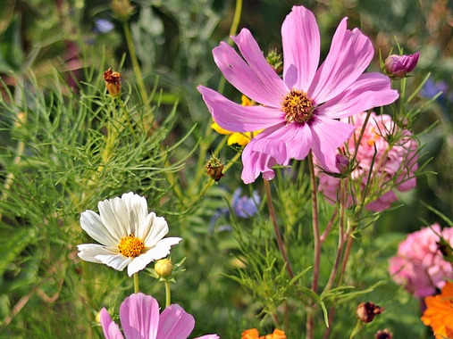 wild-flowers-3592934_960_720.jpg