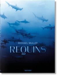 Requins : rencontre avec le prédateur menacé des océans
