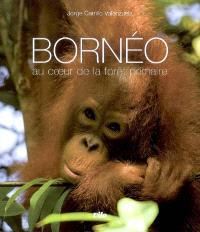 Bornéo : au coeur de la forêt primaire