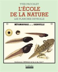 L'école de la nature : les planches Deyrolle