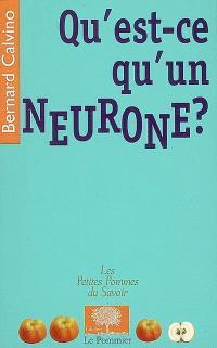 Qu'est-ce qu'un neurone ?