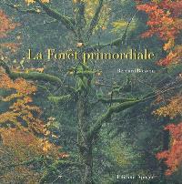 La forêt primordiale