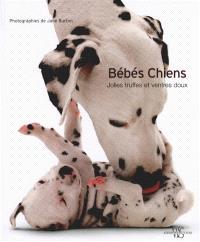 Bébés chiens : jolies truffes et ventres doux