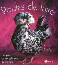 Poules de luxe : les plus beaux gallinacés du monde