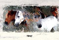 Carnet de chevaux