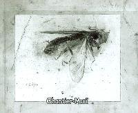 Chantier-Musil (Coulisse) : d'après une lecture de L'homme sans qualités de Robert Musil