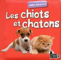 Bébé découvre : les chiots et chatons