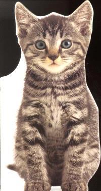 Nougat, le chaton