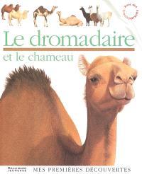 Le dromadaire et le chameau