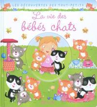 La vie des bébés chats