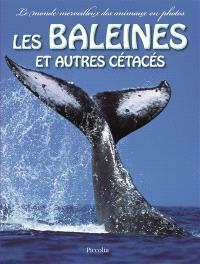 Les baleines et autres cétacés