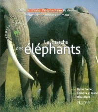 La marche des éléphants : dans la savane, l'éléphanteau va devenir le plus fort de tout les animaux...