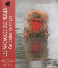 Les macaques des neiges : ces drôles de singes