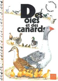 Des oies et des canards
