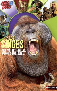 Les singes : tout près des gorilles, babouins, macaques