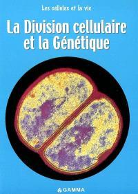 La division cellulaire et la génétique