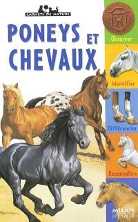 Poneys et chevaux