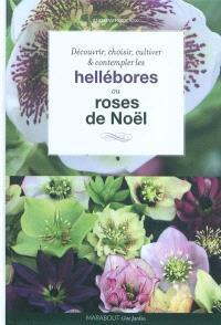 Hellébores, roses de Noël