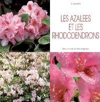 Les azalées et les rhododendrons : les choisir et les soigner