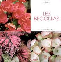 Les bégonias : les choisir et les soigner