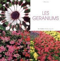 Les géraniums : les choisir et les soigner