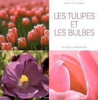 Les tulipes et les bulbes : les choisir et les soigner
