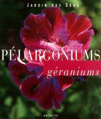 Pélargoniums géraniums
