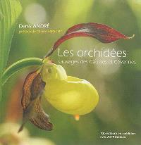 Les orchidées sauvages des Causses et Cévennes