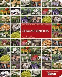 Champignons : un guide + un carnet de terrain