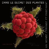 Dans le secret des plantes : un monde étrange et fascinant
