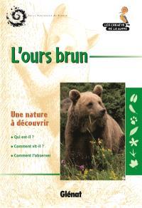 L'ours brun : une nature à découvrir