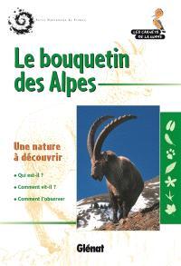 Le bouquetin des Alpes : une nature à découvrir
