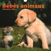 Bébés animaux : calendrier 2014
