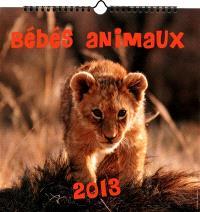 Bébés animaux 2013