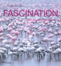 Fascination : quand les animaux se rassemblent