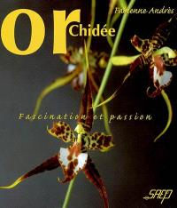 Orchidée : fascination et passion