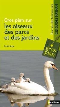 Gros plan sur les oiseaux des parcs et des jardins