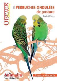 Les perruches ondulées de posture : élevage et sélection