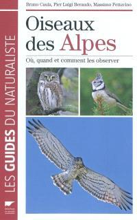 Oiseaux des Alpes : où, quand et comment les observer