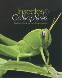 Insectes & coléoptères : espèces, mode de vie, comportement