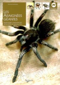 Les araignées géantes : morphologie, comportement, alimentation et reproduction